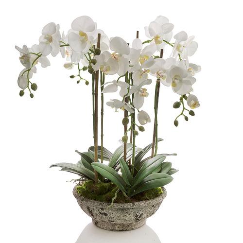 Florabelle 65cm Orchid In Pot