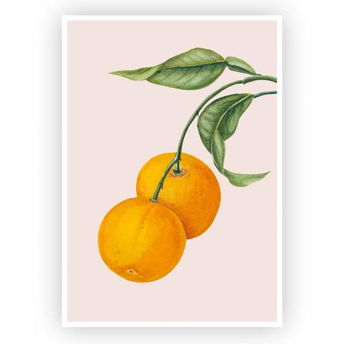 Design Mondo Oranges Printed Wall Art