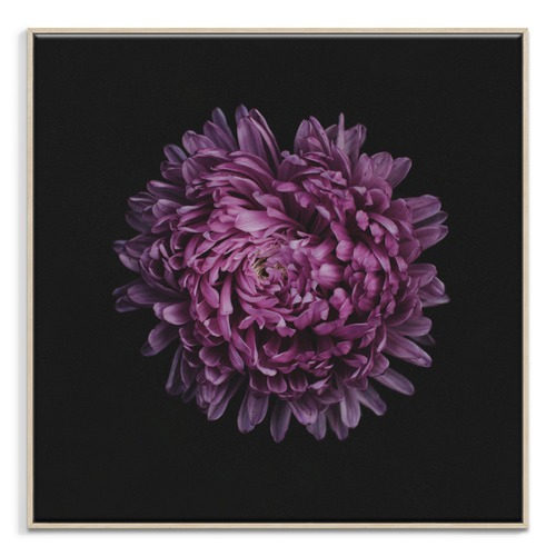 Photographers Lane Mauve Magic Printed Wall Art