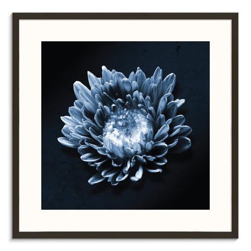 Photographers Lane Blue Flower Printed Wall Art