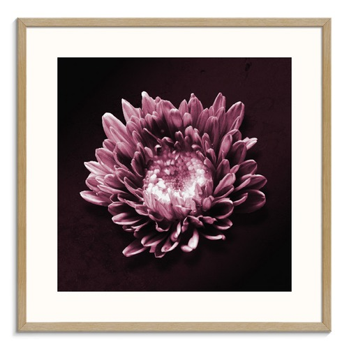 Photographers Lane Mauve Flower Printed Wall Art
