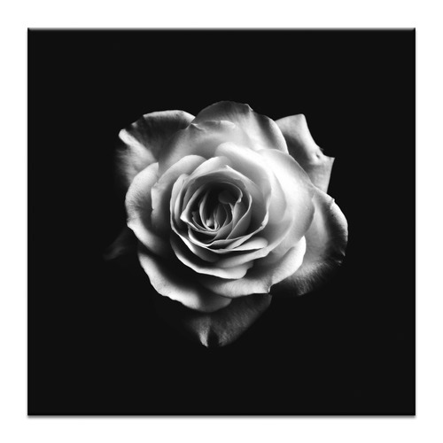 Romantic Rose Printed Wall Art