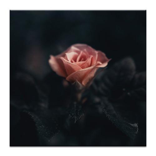 Photographers Lane Deep Rose Printed Wall Art