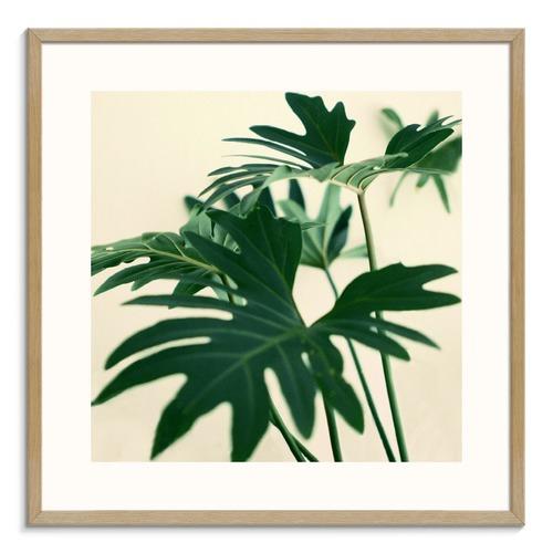 Photographers Lane Indoor Plant Printed Wall Art
