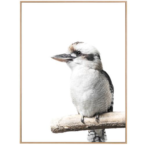 Temple & Webster Kookaburra Friend Framed Canvas Wall Art