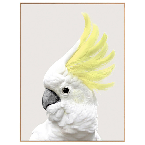 Temple & Webster Yellow Crested Cockatoo Framed Canvas Wall Art