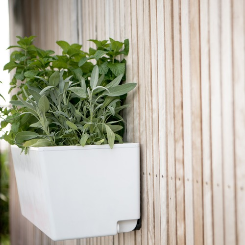 Mini Self Watering Wall Planter
