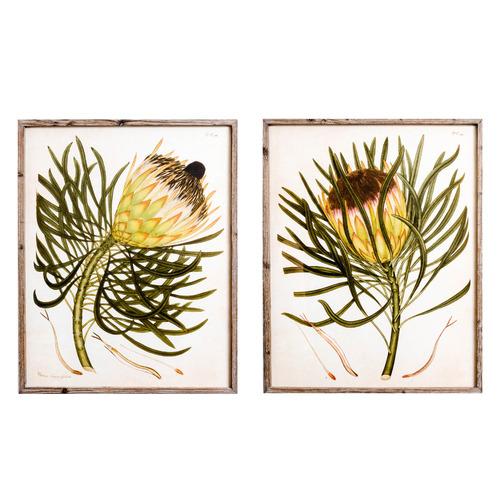 Sunday Homewares 2 Piece Protea Pair Framed Printed Wall Art Set