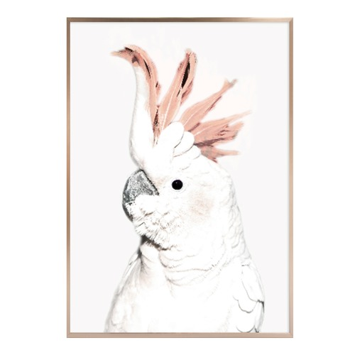 Iconiko Rosette Cockatoo Framed Print
