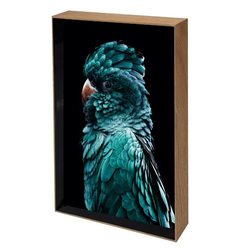 Iconiko Azsure Cocky Framed Printed Wall Art