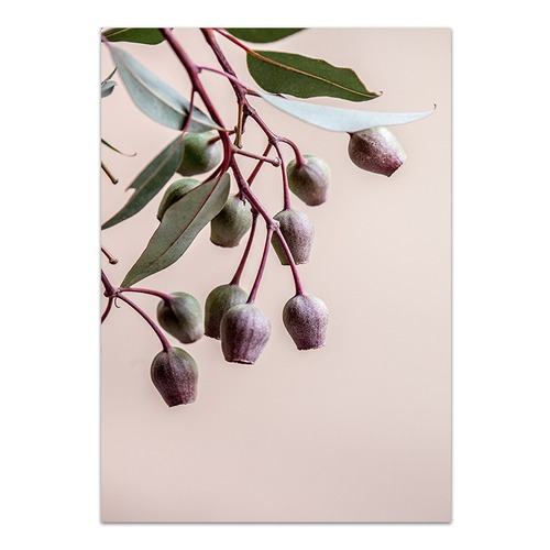 Love Your Space Gumnuts Printed Wall Art