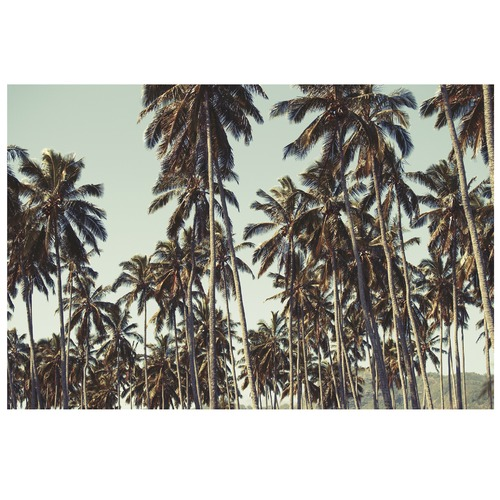 Elle Green Photo Kauai Palm Stax Printed Wall Art
