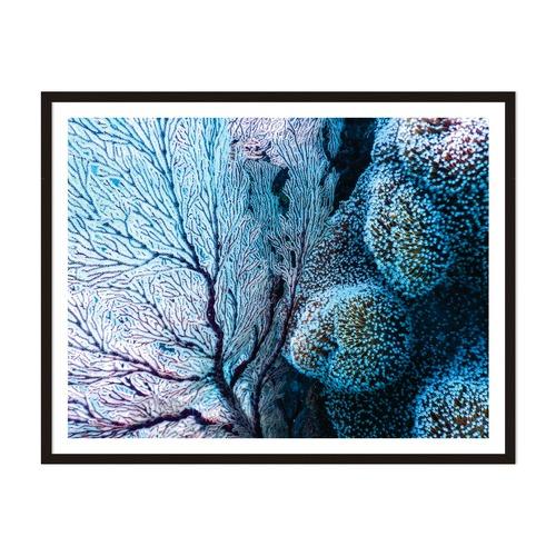 Artefocus Coral Fantasy Framed Wall Art