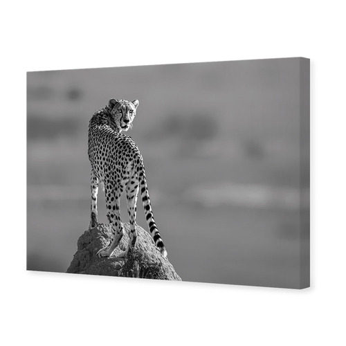 Designer ArtHouse Look At The Back Canvas Wall Art