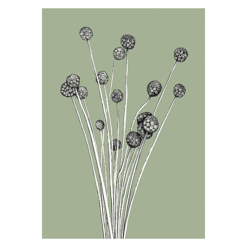 The Billy Buttons on Sage Unframed Paper Print
