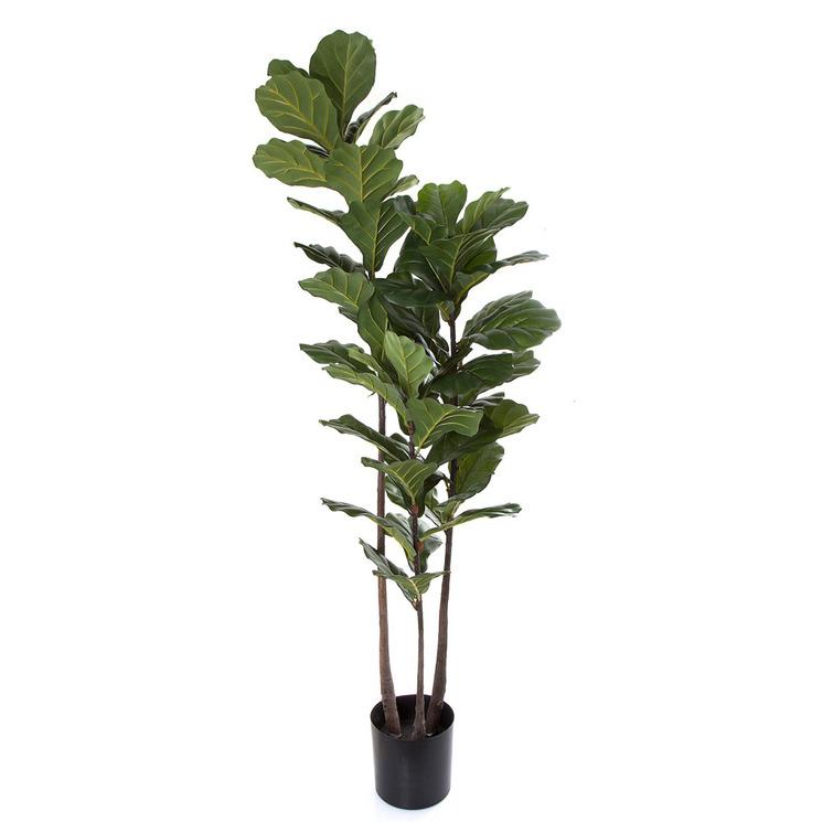 168cm Large Fiddle Leaf Tree