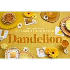 Colour of the month - Dandelion