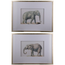 Elephant Framed Printed Wall Art Diptych