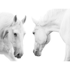 White Horse Pair Artwork