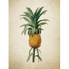 Botanical Pineapple II Artwork
