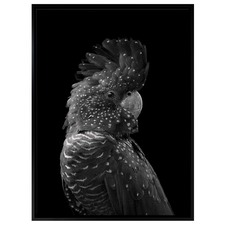 The Masked Ball Black Cockatoo Canvas Wall Art