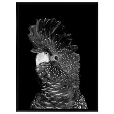 The Masked Ball II Black Cockatoo Canvas Wall Art