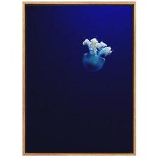 Jellyfish Perfection Canvas Wall Art