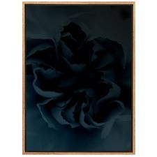 Midnight Petals Canvas Wall Art