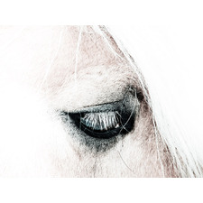In the Blink of a Horse Eye Canvas Wall Art