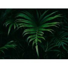 Hiding in the Shadows Plant Canvas Wall Art