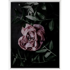 Midnight Peony Canvas Wall Art