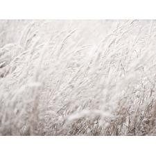 Winter Grass Canvas Wall Art