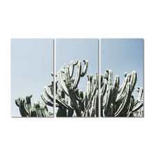 Spiky Cactus Stretched Canvas Wall Art Triptych