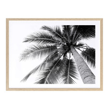 Black Beneath The Palms Printed Wall Art