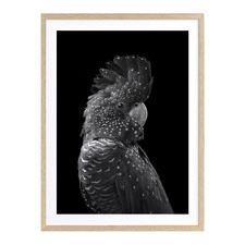 The Masked Ball Black Cockatoo Printed Wall Art