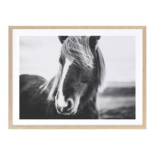 Horse Fringe Benefits Printed Wall Art