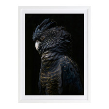 Black Cockatoo Printed Wall Art