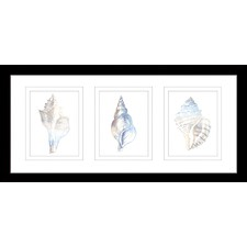 Natural Shells Series Watercolour Silhouette Framed Trio Print