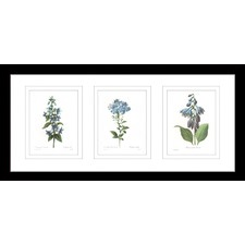 Botanical Illustrations Framed Trio Print