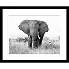 African Animals XIV Framed Print