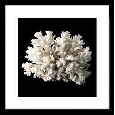 Coral Reef I Framed Print