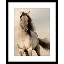 Austin Horses VII Framed Print