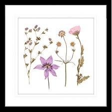 Spring WIldflowers IV Framed Print