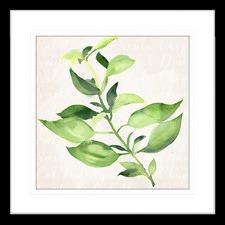 Herb Garden I Framed Print