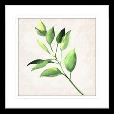 Herb Garden II Framed Print