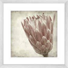 Paused in Time l Framed Printed Wall Art