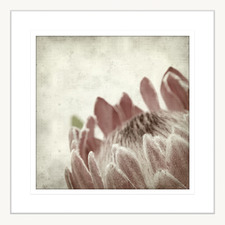 Paused in Time lll Framed Printed Wall Art