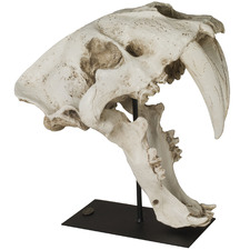 White Sabre-Toothed Cat Skull Ornament