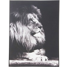 Leo Lion Canvas Wall Art