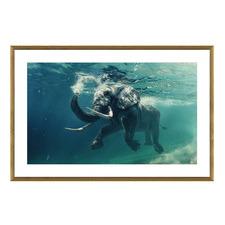 Swimming Elephant Framed Printed Wall Art